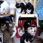 В Великом Новгороде волонтёра «Спасения» выселили из съёмной квартиры  вместе с десятью кошками