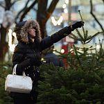В Новгородской области падает спрос на живые ёлки к Новому году