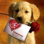 Сегодня в ТД «Русь» защитники животных проводят благотворительную ярмарку