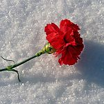 В Новгородской области маленький ребенок погиб, перелезая через забор