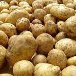 Парфинец украл 150 килограммов картошки из дачного дома