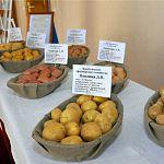Власти Новгородской области добиваются, чтобы рынок картофеля был полностью занят местными производителями