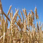 Новгородская область получит от государства 51 миллион на развитие сельского хозяйства