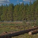 Новгородская область оказалась среди лидеров по числу жалоб в «ОНФ» на незаконную вырубку леса