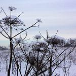В Новгородской области практически не выявляются заброшенные собственниками земли сельхозназначения