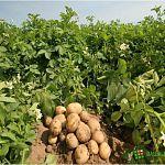 На развитие фермерских хозяйств Новгородская область получит из федеральной казны восемь миллионов