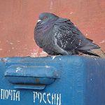 В Новгородской области осудили бывшего начальника почтового отделения