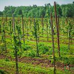 В Новгородской области на развитие растениеводства направят почти 39 миллионов