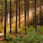 Госдума рассмотрит законопроект, который может превратить государственные леса в огороженные и застроенные территории