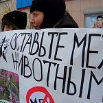 В Великом Новгороде пройдёт шествие зоозащитников