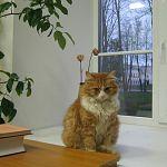 В Великом Новгороде будет первая весна без Рыжика