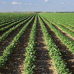 Новгородская область получит порядка 15 миллионов на создание фермерских хозяйств