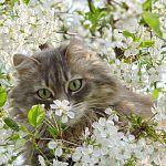 Котики не должны грустить!  Отдаем их в хорошие руки!