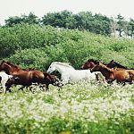 Владимир Краснов: «Чуть помедленнее, кони...»