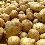 Из 400 тонн картофеля новгородцы съедают лишь треть