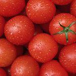 В Новгородской области опять уничтожат груз помидоров