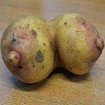 Перевязкин предложил свозить Елену Беркову на картошку