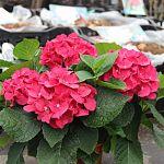От саженцев до тракторов: на новгородских рынках проходит ярмарка  «Сад-огород-2016»