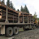 Чиновник о наболевшем: новгородские дороги разбивают не только строители М-11, но и лесовозы