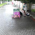 Новгородские зоозащитники предупреждают о мошенниках на улицах города