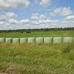 В Новгородской области набирает обороты заготовка сена и силоса