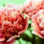 Клуб цветоводов «Вдохновение» сделал еще один красивый подарок Великому Новгороду