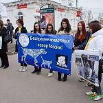 Пикет против жестокости к животным пройдёт в Великом Новгороде в субботу