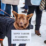 Люди, собаки и даже песец вышли сегодня в Великом Новгороде на пикет против живодеров