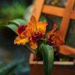 По приглашению Ботанического сада «Ваши новости» побывали на выставке орхидей. Давайте полюбуемся вместе