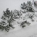 В Новгородской области в ноябре ожидают погоду в пределах климатической нормы