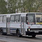 Новгородский «Автобусный парк» арендовал для перевозок музейные «Икарусы»