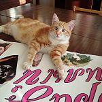 В Малой Вишере потерялся кот Алекс  - талисман и сотрудник местной библиотеки
