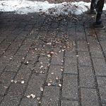 Читательница: почему под скамейками возле памятника Рахманинову рассыпано много монет?