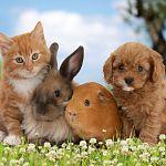 Какие домашние животные у вас есть?