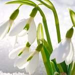 В Прощёное воскресенье возле колмовского храма Успения состоится праздник «Здравствуй, Весна - красна!»