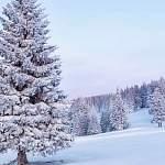В Валдайском районе начали готовиться к Новому году – ищут ёлку