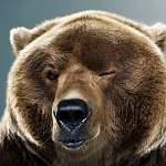 Объявляем фотоохоту на новгородских медведей