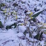 В Новгородской области наступил зимний ренессанс. В выходные потепления не ожидается