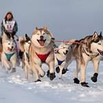 В Новгородской области появилась федерация по гонкам на собачьих упряжках