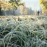 Завтра в Новгородской области ожидаются заморозки