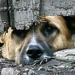 В Госдуму внесён законопроект, предусматривающий срок до 6 лет за жестокое обращение с животными