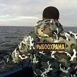 В Новгородской области рассматривают вопрос о запрете свободной торговли рыболовными сетями
