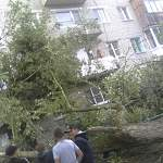 На улице Панкратова дерево рухнуло на жилой дом
