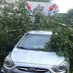 Тяжёлые осадки. В Новгородской области несколько деревьев повредили припаркованные автомобили