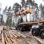 Уже за этот год ущерб от незаконных рубок леса превысил 20 млн рублей