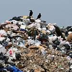 Федеральная антимонопольная служба: сегодня мусор рентабельнее закапывать, чем перерабатывать