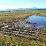 Проливные дожди затопили поля по всей Новгородской области. Не останемся ли мы без урожая в этом году?