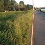 Набережная Александра Невского поросла травой