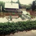 Очередные последствия глобального потопа в Новгородской области. На этот раз погибли не только посевы, но и домашние животные