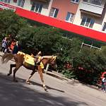 Фотофакт: лошадь на проезжей части удивила новгородцев